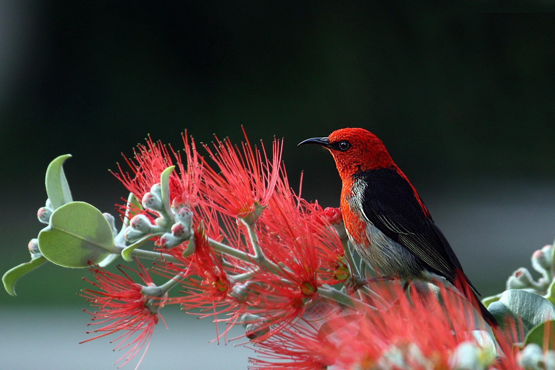 Tips on Photographing Wild Birds